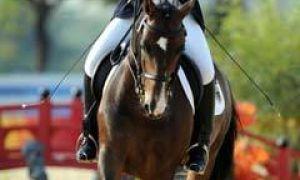Что такое выездка в конном спорте?