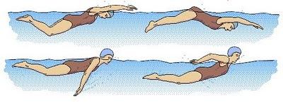 Плавание дельфином техника плавания баттерфляем, отличия и особенности