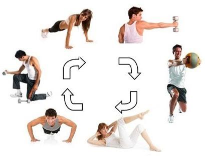 Тренировка в тренажерном зале круговая: что это такое, пример эффективной программы на все группы мышц в спортзале на тренажерах